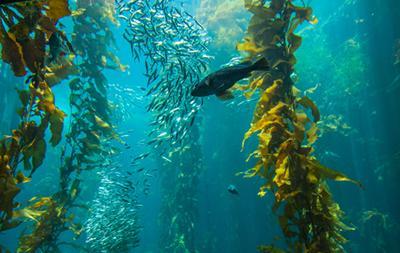 complex ecosystems