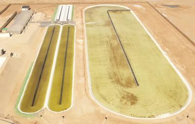 Suwesi algae raceway