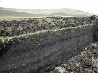 Peat sites