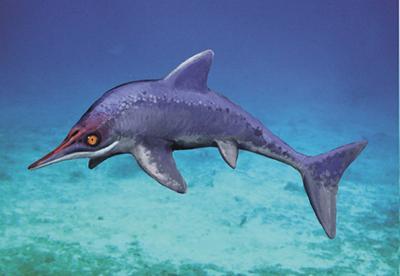Malawania Ichthyosaur