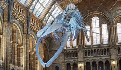 Hope Blue Whale