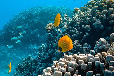 Intelligent Oceans research