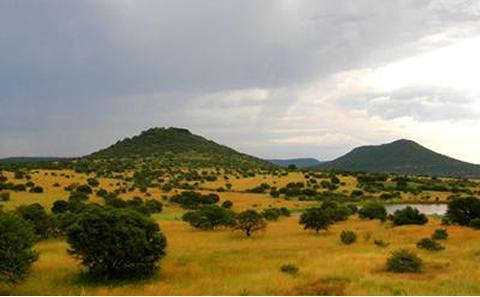Upland South Africa Savanna