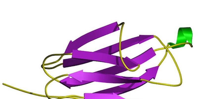 B2M protein structure