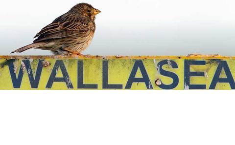 Wallasea
