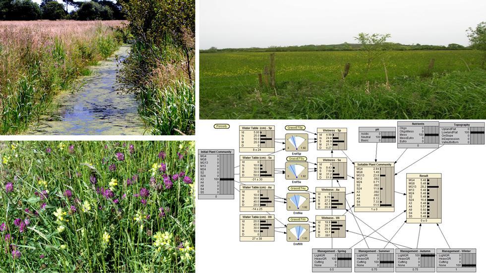 Wetland Plant Community Model