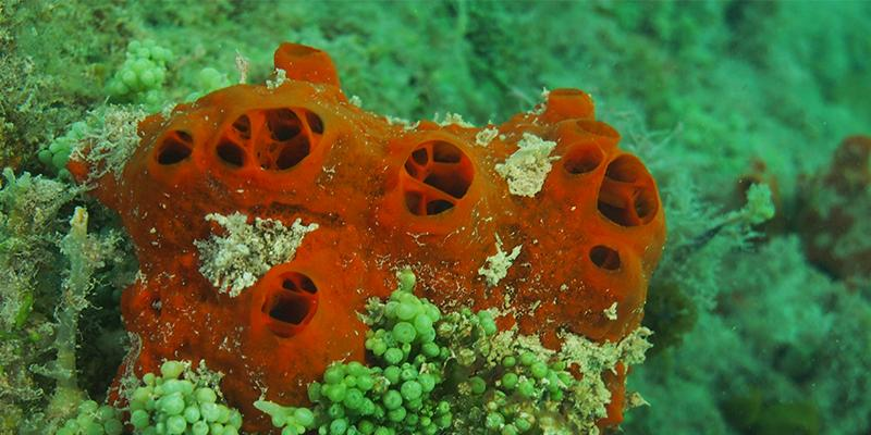Best     Marine biology jobs ideas on Pinterest   Marine biology     Boston University has a world class program in marine biology that is  active in training students at both the undergraduate and graduate level